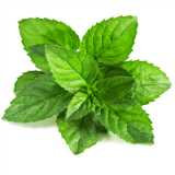 Mint Leaves Pc