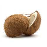 Coconut Large